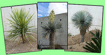 plantes jardins secs